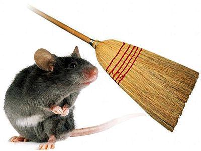 mysz podmiotłą