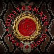 Whitesnake Flesh And Blood recenzja